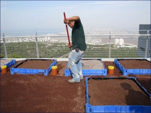 Israel's first Green Roofs Ecology Center